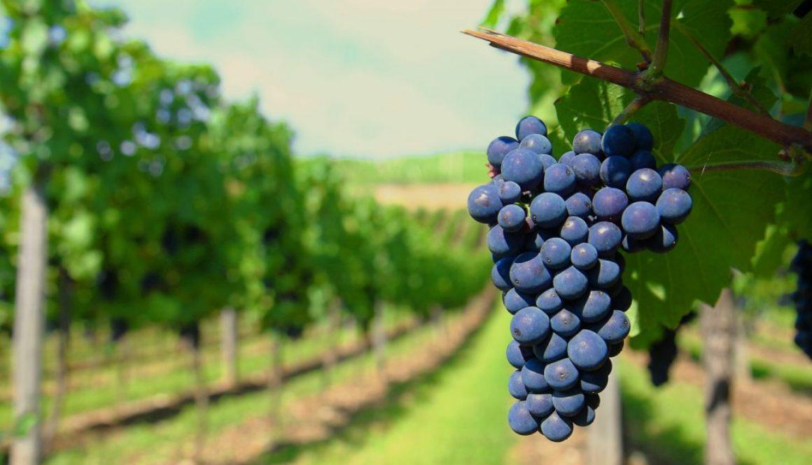 Fitokondi szőlőtermesztés